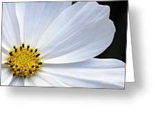 Make A Wish 2 Greeting Card