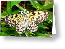 Malabar Tree Nymph Butterfly Greeting Card