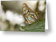 Malachite Butterfly Greeting Card
