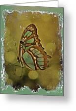 Malachite - Flying Jewel Greeting Card
