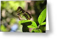 Malachite In Bosque De Guajataca Greeting Card