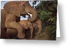 Malalka Mothering Orphans Tsavo Kenya Greeting Card