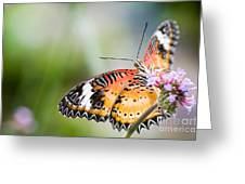 Malay Lacewing Butterfly Greeting Card