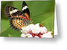 Malay Lacewing Greeting Card