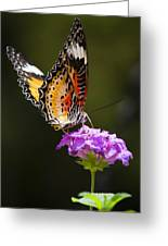 Malay Lacewing On A Flower  Greeting Card