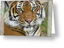 Malayan Tiger 1 Greeting Card