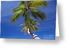 Maldivian 10 Greeting Card by Giorgio Darrigo