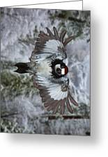 Male Acorn Woodpecker - Phone Case Design Greeting Card by Gregory Scott