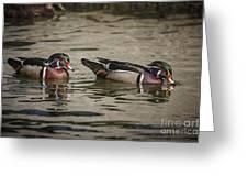 Male Adult Wood Ducks Greeting Card
