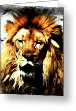 Male African Lion 2 Greeting Card