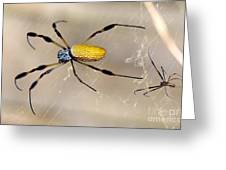 Male And Female Golden Silk Spiders Greeting Card