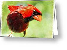 Male Cardinal Close Up - Digital Paint Greeting Card
