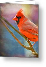 Male Cardinal  - Colorful Perch - Digital Paint Greeting Card