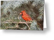 Male Cardinal In Spruce Tree Greeting Card