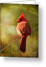 Male Cardinal In The Sun - Digital Paint Greeting Card