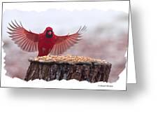 Male Cardinal Landing  Greeting Card