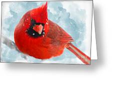 Male Cardinal On Snow Day - Dgital Paint Greeting Card