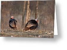 Male Eastern Wild Turkeys Greeting Card by Linda Freshwaters Arndt