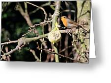 Male European Robin Greeting Card