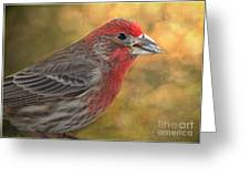 Male Finch With Seed Greeting Card