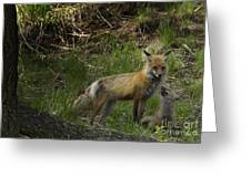 Male Fox And Pup   #3554 Greeting Card