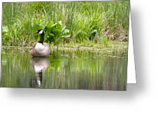 Male Goose  Greeting Card