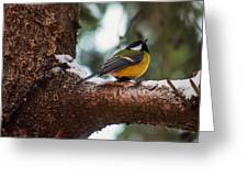Male Great Tit Greeting Card