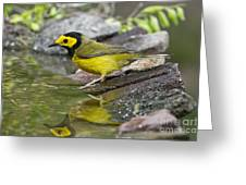Male Hooded Warbler Greeting Card