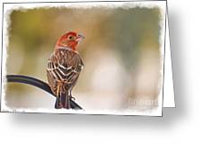 Male House Finch - Digital Paint And Frame Greeting Card