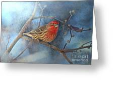 Male House Finch With Blue Texture Greeting Card