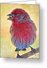 Male Housefinch - Digital Paint Greeting Card