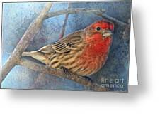 Male Housefinch Close View Greeting Card