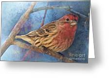 Male Housefinch Digital Paint Greeting Card