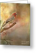 Male Housefinch Looking Up Greeting Card