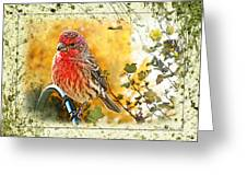 Male Housefinch Photoart Greeting Card