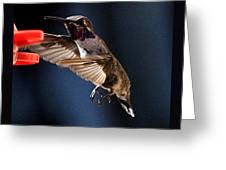 Male Hummingbird Anna's Coming In Too Low Greeting Card
