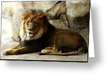Male Lion At Rest Greeting Card
