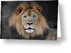 Male Lion Portrait Greeting Card
