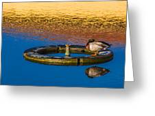 Male Mallard Duck Greeting Card by Carolyn Marshall