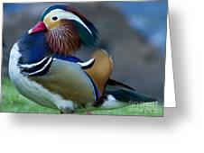 Male Mandarin Duck-signed-#8301 Greeting Card