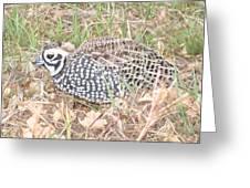 Male Montezuma Quail 5-6-14 Greeting Card