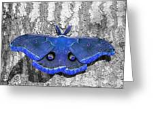 Male Moth - Brilliant Blue Greeting Card