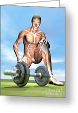Male Musculature Looking At A Dumbbell Greeting Card