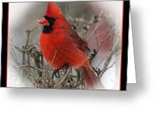 Male Northern Cardinal Greeting Card by John Kunze