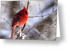 Male Northern Cardinal Oil Paint Effect Greeting Card