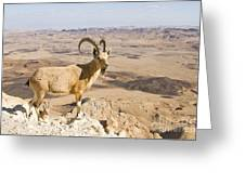 Male Nubian Ibex Capra Ibex Nubiana 1 Greeting Card