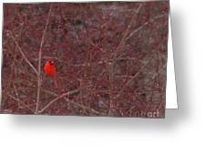 Male Red Cardinal In The Snow Greeting Card