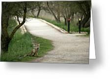 Male Red Fox Vulpes Vulpes Greeting Card