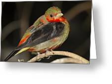 Male Scarlet Tanager Greeting Card by Gerald Murray Photography