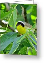 Male Warbler Greeting Card